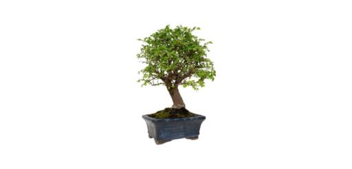 maceteros para bonsai