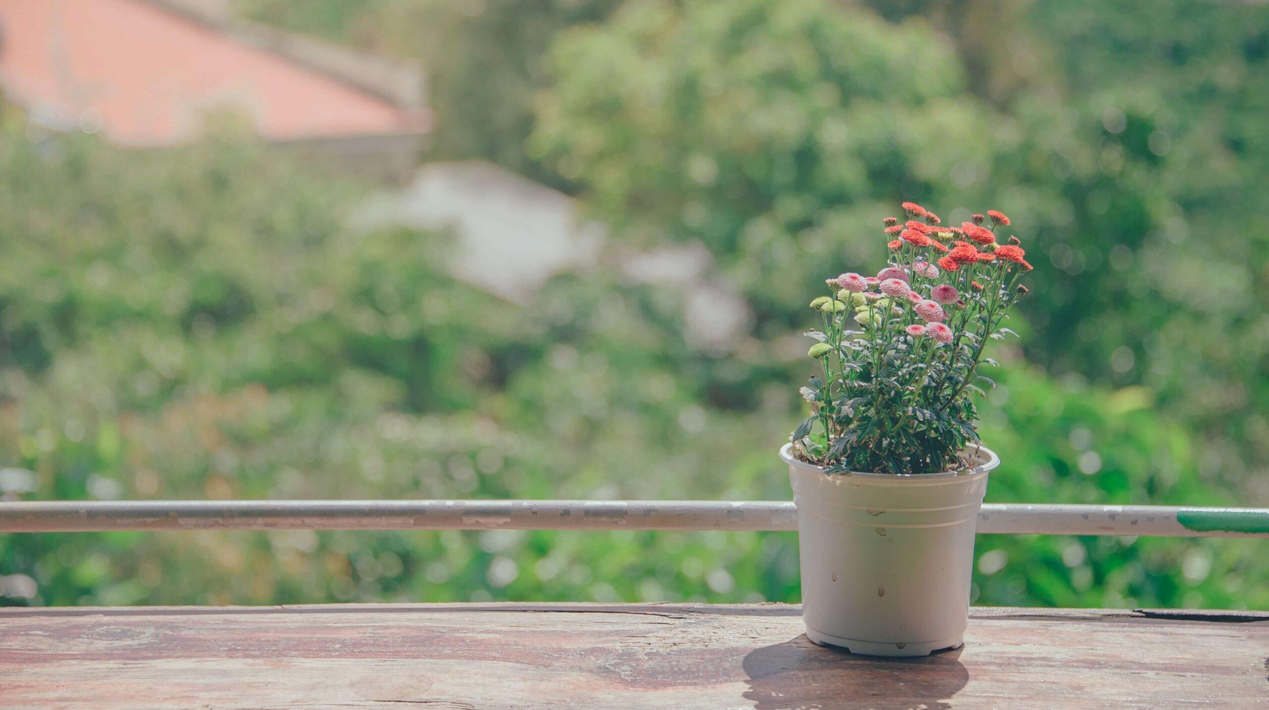 decoración de macetas para jardín