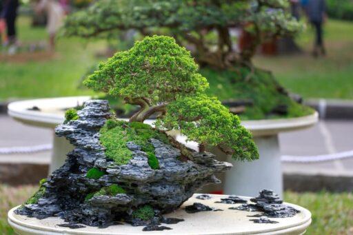 regaderas para bonsai baratas
