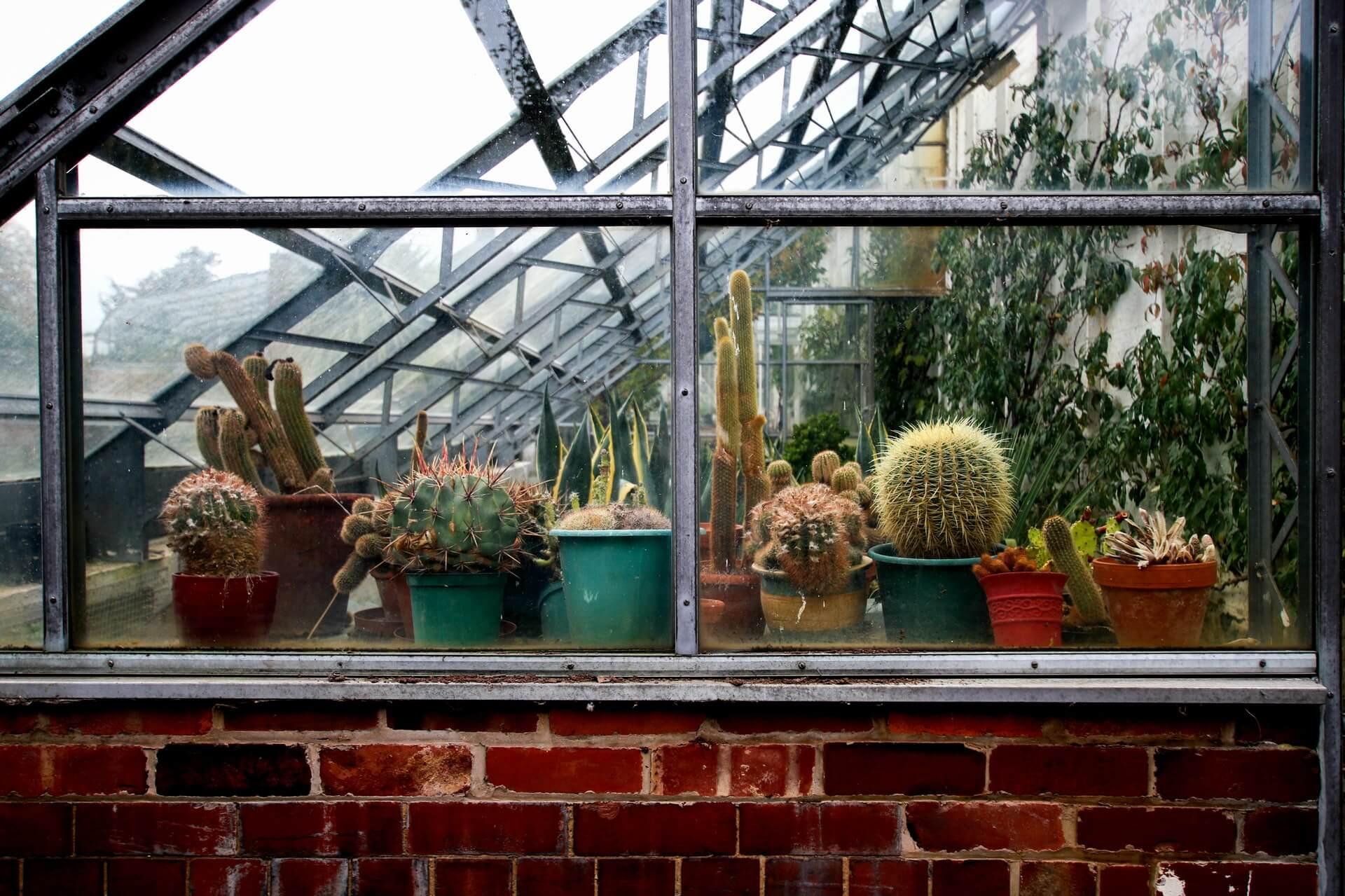 como regar los cactus