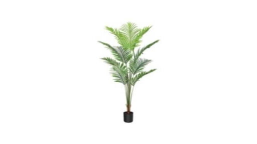 palmera de bambu beneficios y propiedades